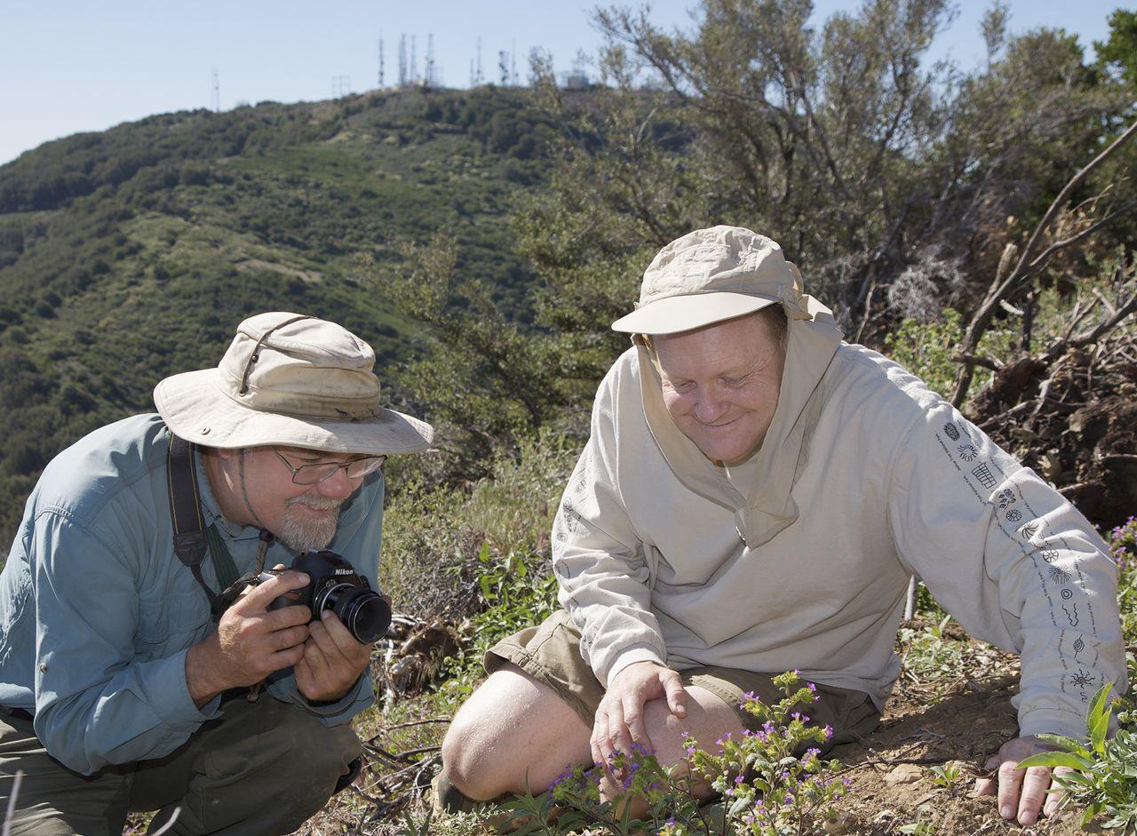 Fred and Bob examine the rare Santiago Peak Cluster Flower