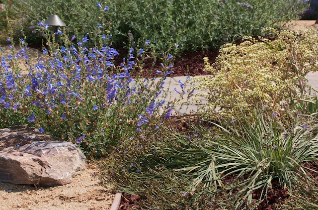 California In My Garden 2017! The Annual CNPS Orange County Chapter Tour Of  Native Plant Gardens In Orange County Will Take Place On April 8, ...