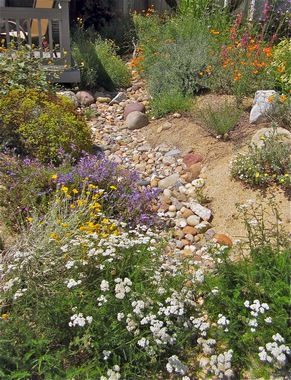 Our Presentations Focus On Sustainable, California Native Plant Garden  Design. Native Plants Need Far Less Water, Care, Pesticides, Fertilizers,  ...